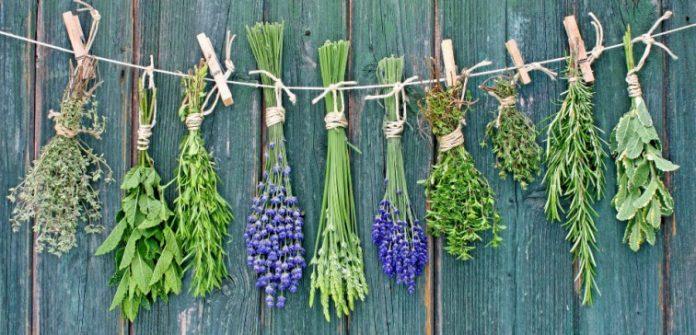 peluang usaha pertanian herbal