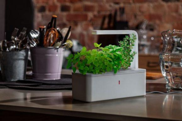 Smart Herb Garden V - Usaha Unik Ini Sukses Dijalankan di Luar Negeri. Bisa Jadi Peluang Usaha di Tanah Air