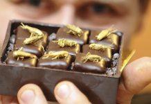 Peluang usaha olahan coklat